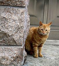 墙角的黄色小猫