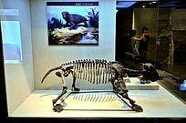 水龙兽化石