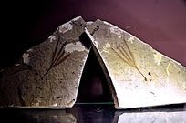 树叶古化石