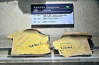 延长抚仙湖虫化石