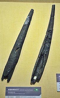 英国的棘鱼化石