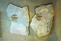 银杏坟叶片化石