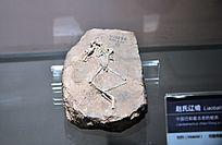 赵氏辽蟾化石