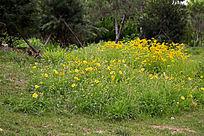 植物园的花草