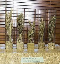 中国古代主要农作物