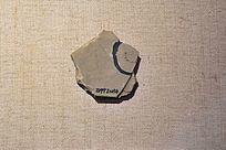 中华微网虫化石
