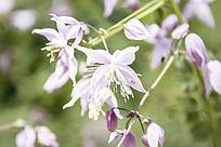 淡紫色的细小花卉
