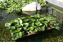 绿色生态水池