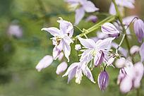 一簇淡紫色的细小花朵
