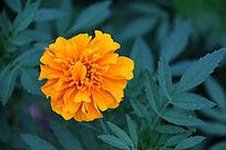 一朵黄色的花