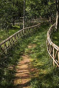 林间的青草小路