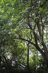 树木上垂落的花