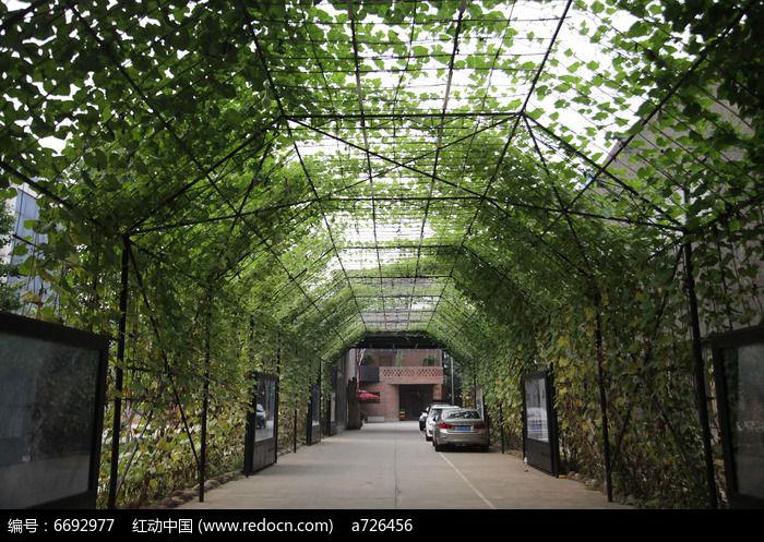 夏季绿色葫芦藤长廊高清图片素材