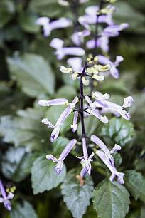 一株紫色的小花朵