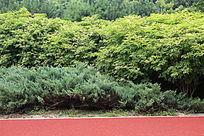 绿色层叠交替的绿色森林和红跑道