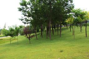 草坡上的绿树