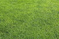 青青的绿草地皮