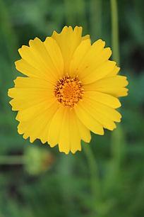 一朵黄色小花