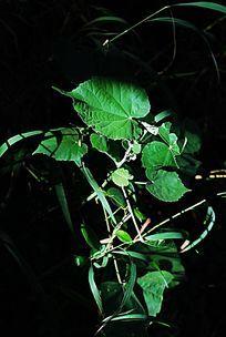 阴影中的绿色植物