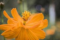 橙色的花卉