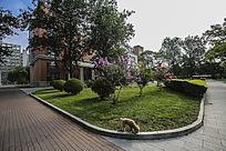 楼前绿地及花草