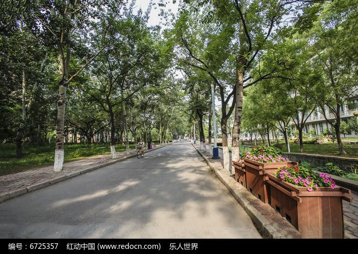 校园道路及两侧树木
