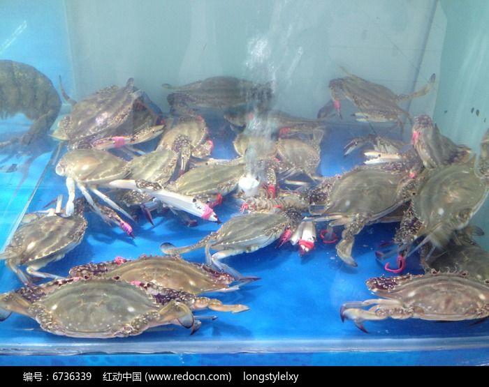 螃蟹图片,高清大图_水中动物素材