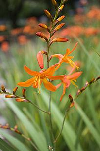 一株橙色的花卉