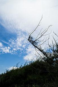 蓝天天空底下的光秃的树丫
