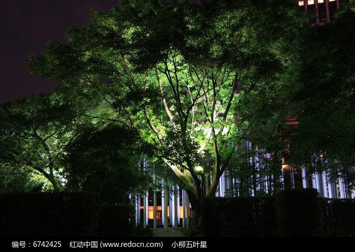 原创摄影图 动物植物 树木枝叶 夜晚树灯照耀下的树