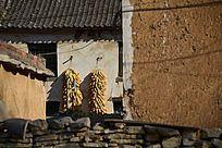 河南农村民居墙上挂玉米
