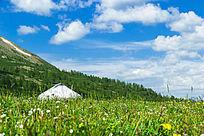 喀纳斯草原花草素材图片