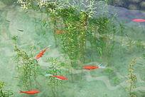 青草池塘里的鱼群