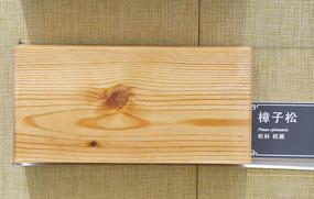 实木纹理方料樟子松