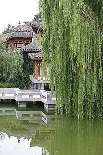 园林景观亭台前的垂杨柳树