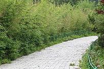 园林景观竹林小路