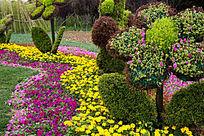 植物花卉造型艺术