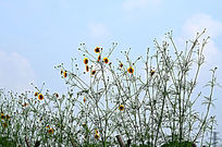 黄色小花骨朵图片