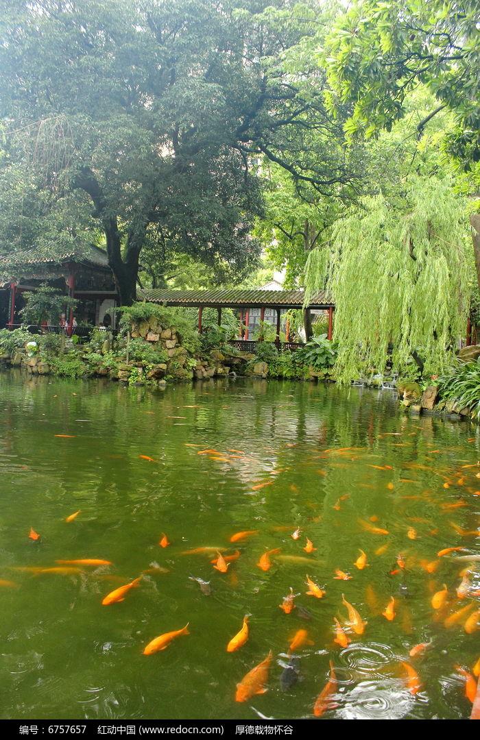 金鱼池图片,高清大图_园林景观素材