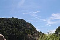 蓝天下的树木自然风景
