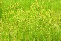 野花风景图