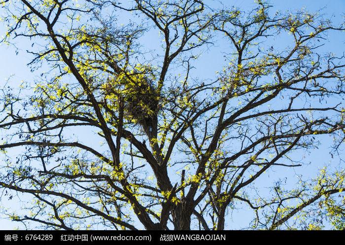 发芽的树茂图片,高清大图_树木枝叶素材