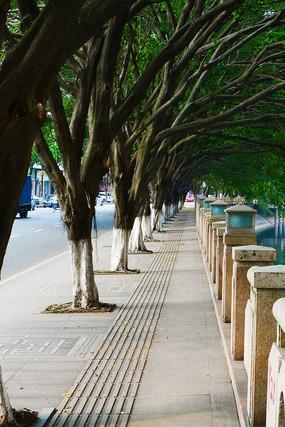 路旁的树木