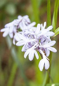 紫色的小花朵