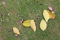 草地上散落的叶子