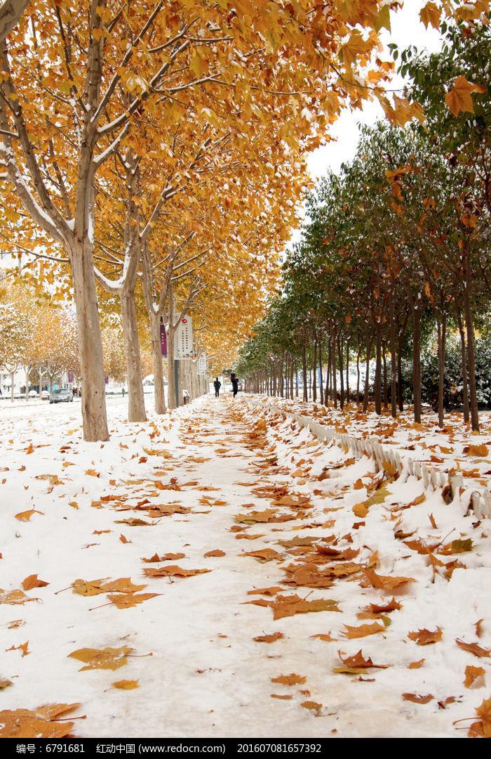 原创摄影图 自然风景 冰川雪地 落叶与雪花