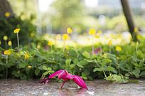 温馨的落花与野花