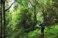 穿越原始森林