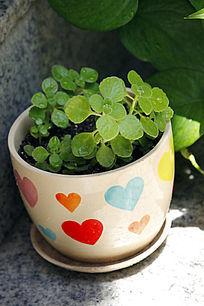 心形图案花盆盆花