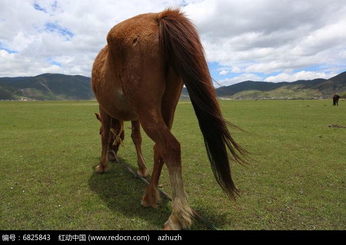 风吹马尾巴图片,高清大图_陆地动物素材